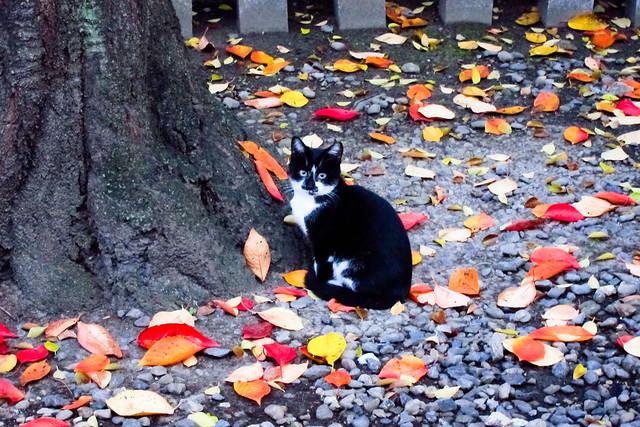 Today's Cat@2011-11-30