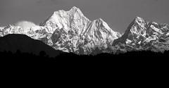 Proved In Black & White - (Monsoon Lover) Tags: blackandwhite india mountain nature flickr himalaya sikkim gangtok kangchenjunga kanchanjangha norbughang sudipguharay brlama mtkanchanjangha hotelnorbughang karmagyaltso
