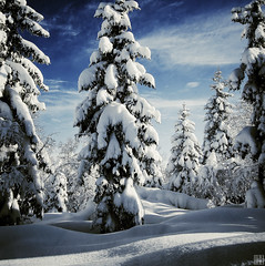 as pure as snow (gregor H) Tags: christmas xmas blue trees sunlight snow alps cold tree texture sunshine clouds forest landscape austria cool shadows natural crystal cloudy spirit natur freezing bluesky christmastree powder passion wintertime whitesnow pure idyllic wintertrees atmospheric cloudysky freshsnow christmaslight beautifulday winterstale frostpattern coldmorning snowcover winterlove winterforest majestictrees strongwinter sunshineonfrost snapseed