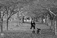 After The Fall (Ian Sane) Tags: park old autumn trees woman dog white black tree fall water leaves tom oregon river portland ian photography town downtown waterfront shepherd candid bare tunnel images front governor german fallen after leash stroll willamette sane mccall the