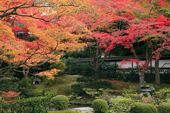 Japanese garden (cate) Tags: trip autumn red color canon garden temple japanese