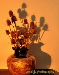 Still life (zoranjc) Tags: flowers stilllife shadows vase bor srbija vaza senka zjk zoranjc