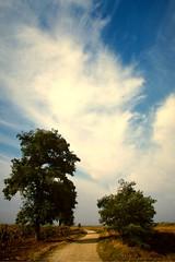 Wanderweg am Neusiedler See, NGIDn1880325444 (naturgucker.de) Tags: burgenland sterreich naturguckerde charaldvorberg utm2533t06255275 ngidn1880325444