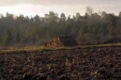 Woodpile December landscape (stenaake) Tags: wood wet field island december sweden skandinavien soil sverige gotland scandinavia woodpile jord ker vt vedtrave