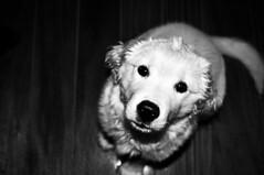 Lana. (Thami Griebler) Tags: bw dog lana pb cachorro