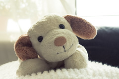 Stuffed Dog Toy,Japan (flaminghead Park) Tags: dog stuffedtoy cute smile childhood japan vertical puppy carpet photography tokyo softness nopeople indoors simplicity oneanimal singleobject colorimage animalhair
