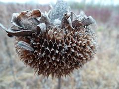 P1000078 (gzammarchi) Tags: italia natura campagna fiore girasole paesaggio pianura monocrome camminata itinerario molinellabo