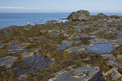 Tidepools - Halls Harbour (laszlofromhalifax) Tags: canada coast novascotia tide shoreline coastal shore bayoffundy tidepools atlanticocean tidal hallsharbour gettyimagescanada