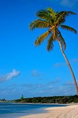 Bahamas(Coco Cay)