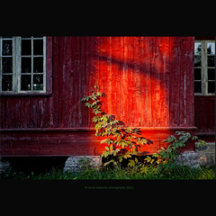 before cropping (original) (stella-mia) Tags: windows sunset shadow red sun green norway wall evening shadows redhouse redwall eveninglight 2470mm domkirkeodden hightlight hedmarksmuseet canon5dmkii annakrmcke krmcke