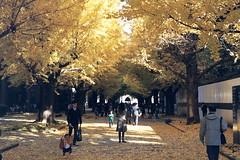 (Kerb 汪) Tags: japan tokyo december 日本 nippon 東京 analogue kerb 東大 東京大学 2011 nikonfg20 kodakgc400 nikkor5018d 201112 nikonfg20film011 數碼4766 47660015 kerbwang tokyo2011day4