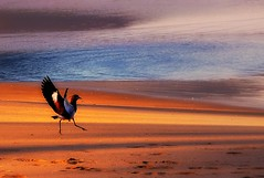 Landing (Serlunar (tks for 6.2 million views)) Tags: flickr do fotos queroquero premiadas flickrduel serlunar