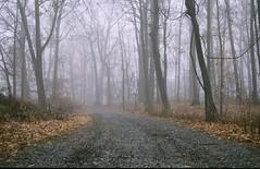 (darrenerbe) Tags: road morning trees winter film leaves fog forest 35mm newjersey pentax nj caldwell pentaxmz30 darrenerbe chasingfogseries