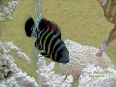 Pez Rayado (Pepe (ADM)) Tags: madrid pez rayado 2011