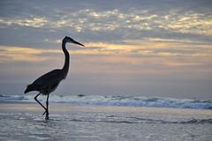 Pensacola Beach (citron_smurf) Tags: christmas deleteme5 deleteme8 deleteme deleteme2 deleteme3 deleteme4 deleteme6 bird deleteme9 deleteme7 beach sunrise saveme florida crane saveme2 saveme3 deleteme10 pensacola 2011 pensacolabeachflorida xmas2011