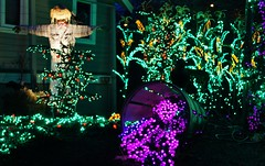 Farm Scene (sea turtle) Tags: christmas light holiday color green colors lights vineyard corn colorful purple farm scarecrow grapes bellevuebotanicalgardens christmaseve botanicalgardens botanicalgarden grape bellevue gardenoflights bellevuebotanicalgarden gardendlights