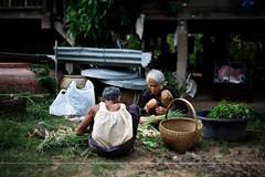 Preparing for the morning market (Palmi Snaer) Tags: old thailand women grandmother market herbs roots thai vendors pammy mahasarakham amazingthailand thaiwomen d700 wapipathum pammyphotocom plmisnrbrynjlfsson mahasarakha sortingoutthegoodthings preparingforthemarket