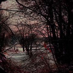 Winter River: Night Branches (Tim Noonan) Tags: digital manipulation photoshop texture river ice trees night branches mood ambience awardtree trolledproud sotn art shockofthenew vividimagination digitalartscene digitalartscenepro digi tim maxfudgeexcellence maxfudge vivid imagination exoticimage artdigital hypothetical netartii maxfudgeawardandexcellencegroup daarklands magiktroll sharingart donnasmagicalpix newreality shining ultramodern