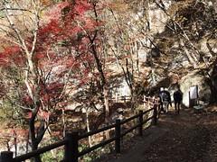 PB243732 (karst) Tags: autumn japan walk autumncolors e30 yamanashi 2011 shosenkyo autumnwalk 1122mmf2835
