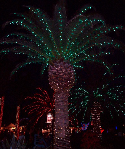largo florida botanical gardens holiday lights in the gardens lights 4 - Lafreniere Park Christmas Lights