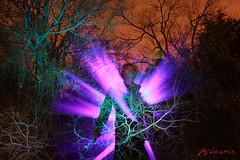 Wood (StandUPP) Tags: lighting longexposure trees light portrait usa lightpainting motion andy silhouette night austin painting lights us long paint texas silhouett