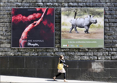 Zoo Zurich (Dreamer7112) Tags: people ads walking zoo schweiz switzerland nikon suisse suiza zurich ad streetphotography billboard advertisement billboards zrich svizzera advertisements zuerich walkin wrangler d300 acrossthestreet zurigo vbz zurichzoo zoozurich nikond300