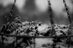 First Snow (Truc Allen Media) Tags: blackandwhite snow canon bokeh t3i 35mm14l trucallenmedia