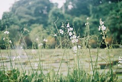 I will (yttria.ariwahjoedi) Tags: green film grass analog canon play ae1 meadow raya bogor kebun