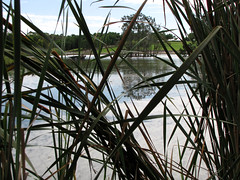 Lake Belvedere (myopixia) Tags: bicentennialpark sydneyolympicpark lakebelvedere myopixia