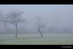 kalter Frhnebel (H. Eisenreich Foto) Tags: morning trees cold nature fog prime licht photo ic frost mood foto fotografie nebel natur hans award heike icy kalt landschaft bume morgen stimmung 2012 oberpfalz reise reif zart eisig frhnebel reisefotografie rauhreif landschaftsfotografie abigfave schmidmhlen eisenreich reisefoto eijomian landschftsfoto