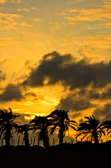 Palm Tree Fence (Brian Hammonds) Tags: ocean sunset red sea sky orange cliff reflection beach nature water leaves clouds fence asian rocks asia purple sundown bright wide taiwan vivid palm palmtrees tropical taiwanese fronds kenting nikond7000
