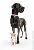Marketing-photo-shoot-14 (Rob Orthen) Tags: dogs koiria roborthenphotography bigdogsmalldog mainoskuvaus koirakuvaus
