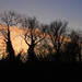 Earlswood Sunset - Jan 2012 - Ents Talking Among Themselves