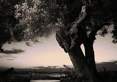 the prayer (*F~) Tags: bridge sunset sky tree portugal lisboa praying ponte sacred orao olivetree oraison prire