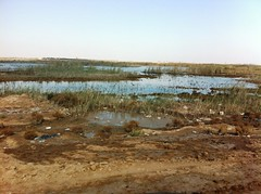 Shatt al-Arab Waterway Marshland, Basrah, Iraq