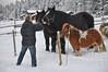 winter meeting (Grey travel) Tags: trees winter horses people snow man animal norway fence gap scape telemark ginordicjan12