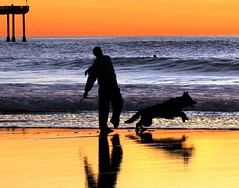 Fetch the Stick, Dog Beach (moonjazz) Tags: fetch retrieve throw dog pet nature friends canine run photography mansbestfriend pets train beach california reflections ocean light companion moonjazz race