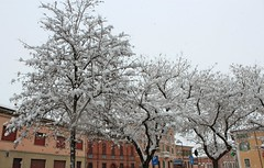 winter blooming (giancarlo.guadagnini) Tags: winter snow neve inverno