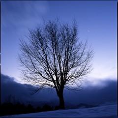 world in my dream  (HASSELBLAD 500C/M) (potopoto53age) Tags: wood snow plant tree 6x6 film apple japan zeiss mediumformat square aperture thankyou f100 hasselblad squareformat carl 日本 epson fujifilm provia f28 planar yamanasi snowyday yatsugatake zelkova 80mm 500cm hassel hasselblad500cm 山梨 牧場 八ヶ岳 appleaperture nont 小淵沢 kobuchizawa rdp3 けやき 北杜市 eveninglandscape 県立 japanesezelkova hokutoshi epsongtx970 gtx970 betterscanning mygearandme mygearandmepremium mygearandmebronze mygearandmesilver mygearandmegold mygearandmeplatinum mygearandmediamond fujifilmproviaf100 dualmffilmholder betterscanningdualmffilmholder carlzeissplanar80mmf28nont worldinmydream prefecturalyatsugatakeranch 県立八ヶ岳牧場