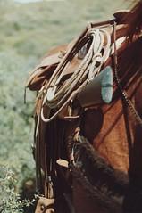 COWBOY GEAR (AZ CHAPS) Tags: ranch horse leather cowboy gear rope saddle tack