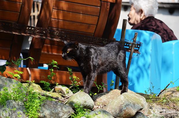 [Cat]台北關渡宮。動靜兩貓,下個落腳處