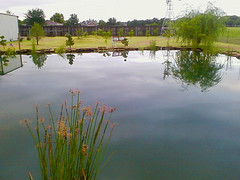 "Our pond • <a style=""font-size:0.8em;"" href=""http://www.flickr.com/photos/76134284@N04/6837475235/"" target=""_blank"">View on Flickr</a>"