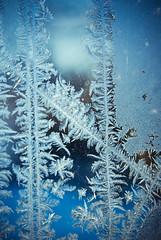 -13C (Zaskars) Tags: blue winter macro ice window pentax hiver sigma bleu 100 1770 fentre glace k10d