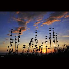 Goodbye a beautiful day! (-clicking-) Tags: lighting light sunset sky sun sunlight nature beautiful grass sunshine silhouette clouds skyscape scenery colorful spectrum natural cloudy ngc down scene vietnam npc bluehour goodbye lovely grassy amazingsky hoànghôn phanthiết vietnameselandscape blinkagain bestofblinkwinners blinksuperstars goobyeday