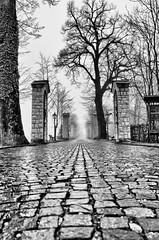 Horror road _ B&W [EXPLORE] (Riccardo Brig Casarico) Tags: fog wow nebbia atmosfera brig riki camminare atmosphre brigrc