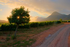 The Vines of Creation Wines (skylerwshaw) Tags: hermanus southafrica vineyard wine heavenandearth hemelenaarde