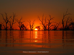 Evening Glow. Sunset at Lake Pamamaroo, outback NSW, Australia (Paula McManus) Tags: trees sunset tree nature water silhouette landscape glow flood olympus newsouthwales outback brokenhill wetland deadtrees floodwater menindee treesinwater menindeelakes lakepamamaroo paulamcmanus outbacknewsouthwales olympuspenepl1