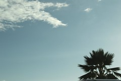 Spinal (Sara Thorson) Tags: sky usa cloud america hawaii nikon unitedstates palm hi nikkor kona afs  dx kailuakona  55200mm  1456g d3100