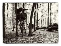 Deerstand (Ina Dragon) Tags: nature forest woods outdoor watching observe perch sw hunter wald deerstand hochsitz beobachten highseat jger jgerstand