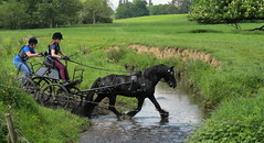 Chester Horse Driving Trials Erddig 14  IMG_7166 (rowchester) Tags: horse water driving carriage chester trials erddig